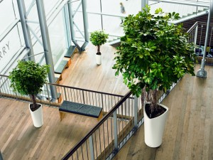Plant is good for our office